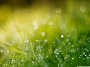 wet_grass_bokeh_summer-wallpaper-2800x2100